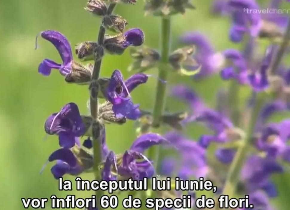 flori wild